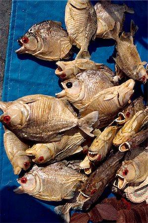 piranha fish - Dried piranha fish for sale in Santarem in Brazil, South America Stock Photo - Rights-Managed, Code: 841-02703598