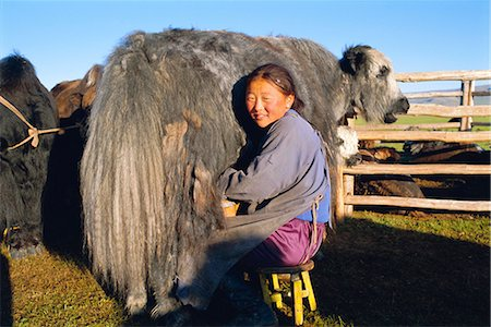 Milking a yak, Khoid Terkhiin valley, Arkhangal, Mongolia, Asia Stock Photo - Rights-Managed, Code: 841-02714696