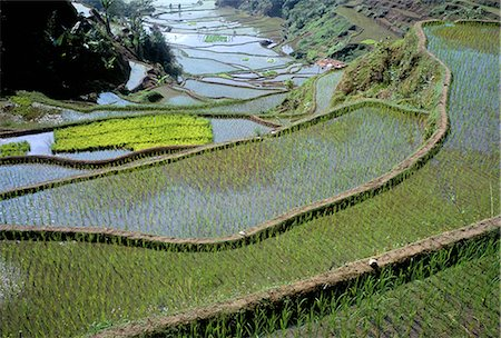 philippine terrace farming - Rice terraces of the Ifugao people,UNESCO World Heritage Site, northern area, island of Luzon, Philippines, Southeast Asia, Asia Stock Photo - Rights-Managed, Code: 841-02715492