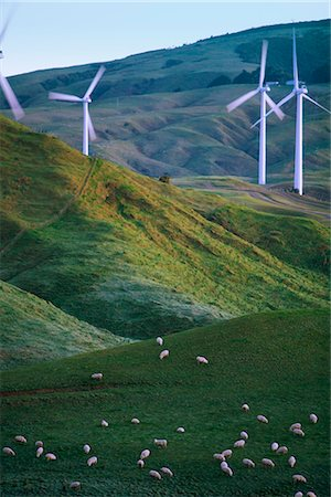 Te Apiti Wind Farm, Palmerston North, Manawatu, North Island, New Zealand, Pacific Stock Photo - Rights-Managed, Code: 841-02718694