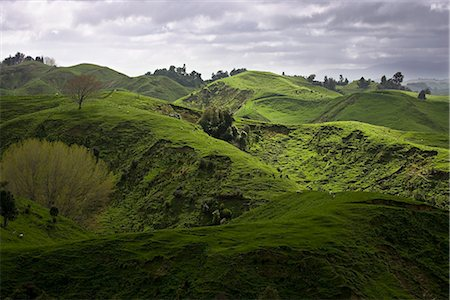 Sheep pasture in rural Manawatu, North Island, New Zealand, Pacific Stock Photo - Rights-Managed, Code: 841-02718704