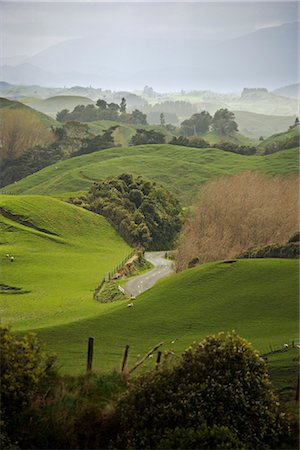 Rangiwahia Road, winding through sheep pasture in rural Manawatu, North Island, New Zealand, Pacific Stock Photo - Rights-Managed, Code: 841-02718703