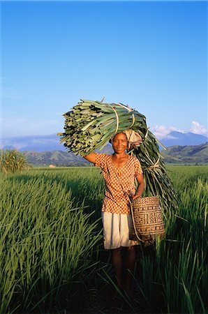 flores - Woman carrying palm fronds, standing in rice field, Refina, Flores, Indonesia, Southeast Asia, Asia Stock Photo - Rights-Managed, Code: 841-02712084