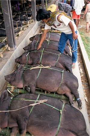 Pig market at Rantepao, Toraja area, Sulawesi, Indonesia, Southeast Asia, Asia Stock Photo - Rights-Managed, Code: 841-02712221