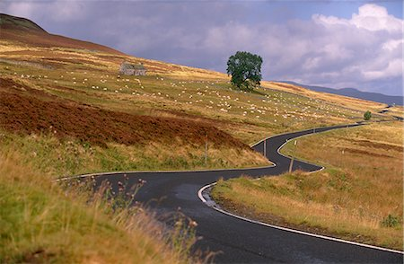 simsearch:845-03720933,k - Winding road and sheep east of Pitlochry, Perth and Kinross, Central Scotland, Scotland, United Kingdom, Europe Stock Photo - Rights-Managed, Code: 841-02720471
