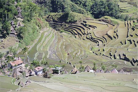 philippine terrace farming - Spectacular amphitheatre of rice terraces around the mountain province village of Batad, northern area of the island of Luzon, Philippines, Southeast Asia, Asia Stock Photo - Rights-Managed, Code: 841-02722797