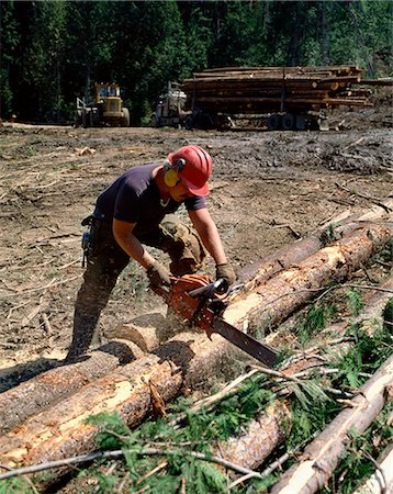Logging in British Columbia, Canada, North America Stock Photo - Rights-Managed, Code: 841-02824659