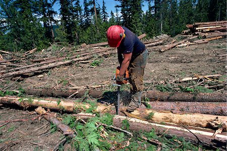 Cutting logs to size for transport, British Columbia, Canada, North America Stock Photo - Rights-Managed, Code: 841-02824673