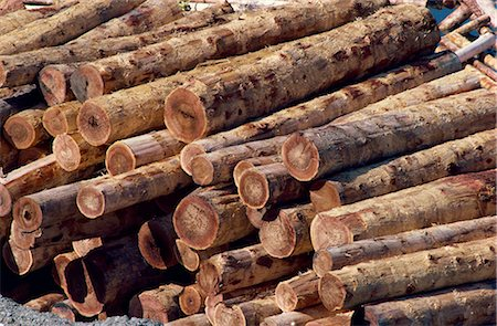 Logs awaiting processing at mill, British Columbia, Canada, North America Stock Photo - Rights-Managed, Code: 841-02824681