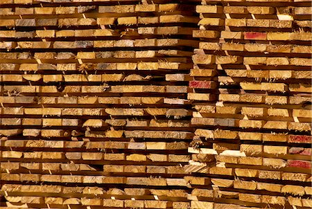 Timber, British Columbia, Canada, North America Stock Photo - Rights-Managed, Code: 841-02824963