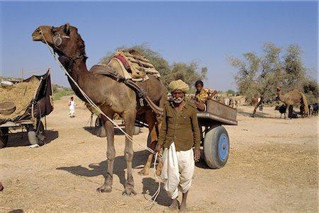 rajasthan camel - Livestock fair near Dechhu, north of Jodhpur, Rajasthan, India Stock Photo - Rights-Managed, Code: 841-02826239