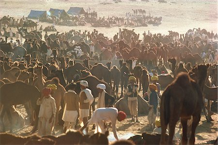 rajasthan camel - Camel Fair, Pushkar, Rajasthan state, India, Asia Stock Photo - Rights-Managed, Code: 841-02900982