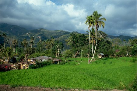 flores - Rice paddies in a rural landscape at Moni, Flores, Indonesia, Southeast Asia, Asia Stock Photo - Rights-Managed, Code: 841-02917585