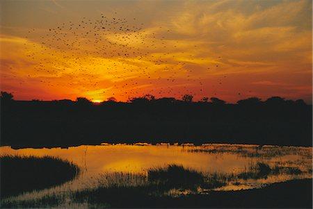 Waterhole at sunset, Namutoni Camp, Etosha National Park, Namibia, Africa Stock Photo - Rights-Managed, Code: 841-02918653