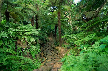 Tree ferns, Kirstenbosch Botanical Gardens, Cape Town, South Africa, Africa Stock Photo - Rights-Managed, Code: 841-02919736