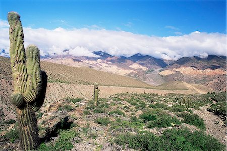 Cardones growing in the desert at 3000 metres, near Alfarcito, Jujuy, Argentina, South America Stock Photo - Rights-Managed, Code: 841-02925458
