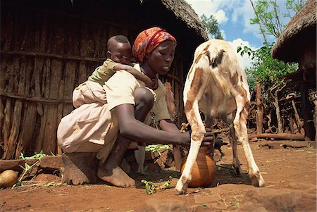 Mother with baby on her back milking goat, Harar, Ethiopia, Africa Stock Photo - Rights-Managed, Code: 841-02946096