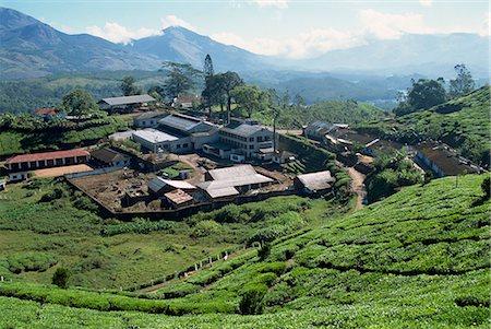 Tea estate near Munnar, Kerala state, India, Asia Stock Photo - Rights-Managed, Code: 841-02993587