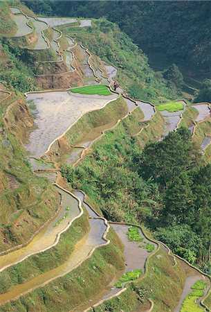 philippine terrace farming - Banaue terraced rice fields,UNESCO World Heritage Site,northern area,island of Luzon,Philippines,Southeast Asia,Asia Stock Photo - Rights-Managed, Code: 841-03034252