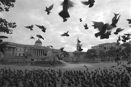 silhouette black and white - Flocks of pigeons in Trafalgar Square,London,England,United Kingdom,Europe Stock Photo - Rights-Managed, Code: 841-03035025