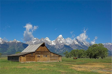 Mormon Row Barn and a bison off Antelope Flats Road, Jackson Hole, Grand Teton National Park, Wyoming, United States of America, North America Stock Photo - Rights-Managed, Code: 841-03032306