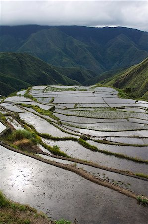 philippine terrace farming - Afternoon sunshine reflected on water filled rice terraces near Tinglayan, The Cordillera Mountains, Kalinga Province, Luzon, Philippines, Southeast Asia, Asia Stock Photo - Rights-Managed, Code: 841-03055238