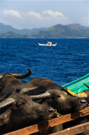 Cargo and passenger ferry from El Nido to Coron Town, with Carabao oxen being transported by ship, Palawan Province, Philippines, Southeast Asia, Asia Stock Photo - Rights-Managed, Code: 841-03055262