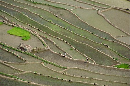 philippine terrace farming - Aerial of the rice terraces around the village of Batad in the Mountain Province in north Luzon island, the Philippines, Southeast Asia, Asia Stock Photo - Rights-Managed, Code: 841-03067433
