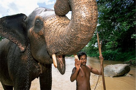 Elephant and his mahout washing in the river near Kandy, Sri Lanka, Asia Stock Photo - Rights-Managed, Code: 841-03061813