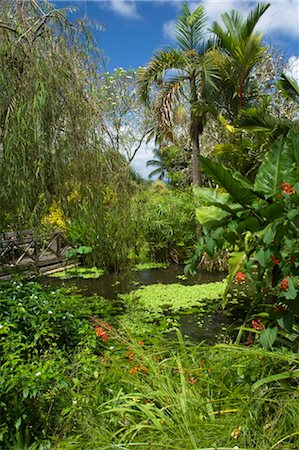 Tropical plants around a pond and bridge, Andromeda Botanic Gardens, Barbados, Windward Islands, West Indies, Caribbean, Central America Stock Photo - Rights-Managed, Code: 841-03505055
