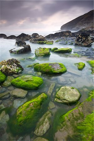 Algae covered rocks at Tregardock Beach, North Cornwall, England, United Kingdom, Europe Stock Photo - Rights-Managed, Code: 841-03518730
