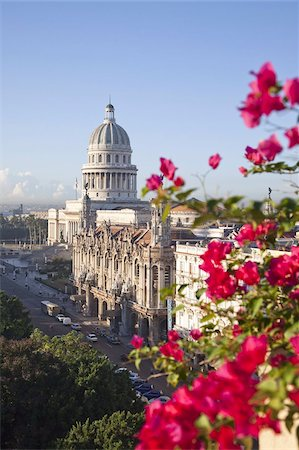 Bougainvillea flowers in front of The Capitolio building, Havana, Cuba, West Indies, Central America Stock Photo - Rights-Managed, Code: 841-03677184