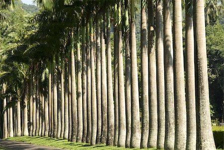 Peradeniya Botanic Gardens, Kandy, Hill Country, Sri Lanka, Asia Stock Photo - Rights-Managed, Code: 841-03672349