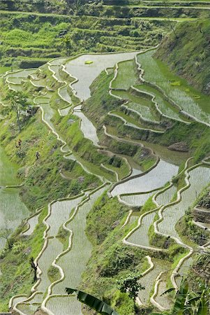 philippine terrace farming - Mud-walled rice terraces of Ifugao culture, Banaue, UNESCO World Heritage Site, Cordillera, Luzon, Philippines, Southeast Asia, Asia Stock Photo - Rights-Managed, Code: 841-03672354