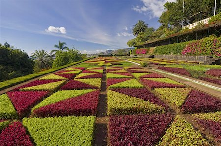 Formal gardens in the Botanical gardens (Jardim Botanico), above Funchal, Madeira, Portugal, Europe Stock Photo - Rights-Managed, Code: 841-03672701