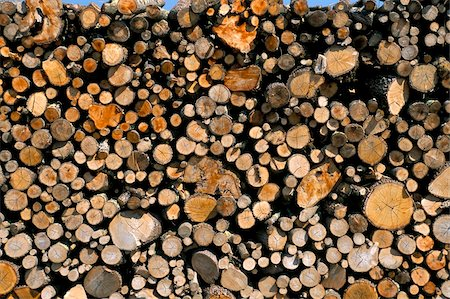 forestry - Wood detail, Tuscany, Italy, Europe Stock Photo - Rights-Managed, Code: 841-03673834