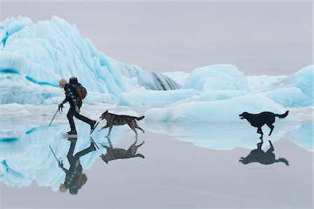 Man ice skating at Sheridan Glacier with two dogs reflecting in thin layer of water on ice and icebergs in the background, Cordova, Southcentral Alaska, Winter Stock Photo - Rights-Managed, Code: 854-05974492