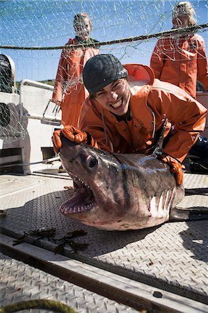 A Salmon Shark Caught While Salmon Fishing In The Alaska Department Of Fish And Game 'alaska Peninsula Area' Also Known As 'area M'. This Has Been A Controversial Fishing Region. Stock Photo - Rights-Managed, Code: 854-08028180