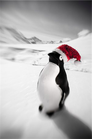Plastic penguin with a red santa hat standing in the snow Hatcher Pass Southcentral Alaska Winter Stock Photo - Rights-Managed, Code: 854-02955839