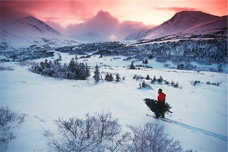 quest - Man Chugach Mtns Snowshowing Carrying Christmas Tree AK Southcentral Winter Sunrise Stock Photo - Rights-Managed, Code: 854-02955876