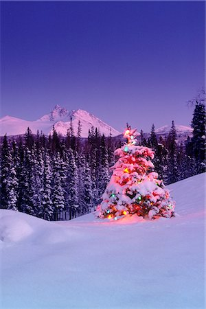 Decorated Christmas Tree @ Chugach NP SC Alaska Stock Photo - Rights-Managed, Code: 854-02955886