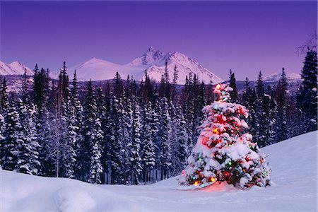 Decorated Christmas Tree @ Chugach NP SC Alaska Stock Photo - Rights-Managed, Code: 854-02955887