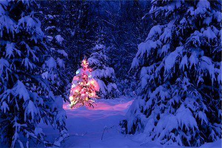 Christmas Tree with Colored Lights Anchorage SC Alaska winter scenic Stock Photo - Rights-Managed, Code: 854-02955889