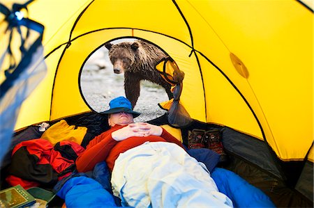 COMPOSITE Grizzly bear looking through tent door with man inside, Alaska COMPOSITE Stock Photo - Rights-Managed, Code: 854-03538061