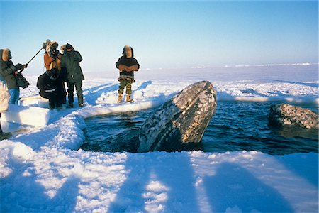 professional (pertains to traditional blue collar careers) - Local Alaskans & News Crews view whales trapped by sea ice through a breathe hole near Point Barrow during the 1988 California Gray Whale Rescue, Arctic Alaska, Winter/n Stock Photo - Rights-Managed, Code: 854-03646066