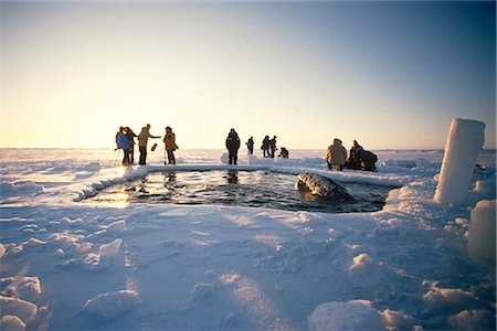 professional (pertains to traditional blue collar careers) - Local Alaskans & News Crews view whales trapped by sea ice through a breathe hole near Point Barrow during the 1988 California Gray Whale Rescue, Arctic Alaska, Winter/n Stock Photo - Rights-Managed, Code: 854-03646067