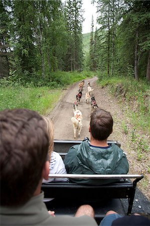 quest - Visitors take a sled dog ride in a training cart through a parking lot at Chena Hot Springs Resort, Interior Alaska, Summer Stock Photo - Rights-Managed, Code: 854-03739763