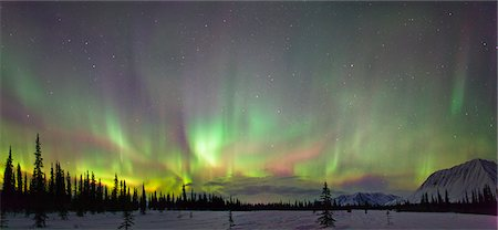 panoramic winter scene - View of Northern Lights and spruce trees in Broad Pass, Southcentral Alaska, Winter Stock Photo - Rights-Managed, Code: 854-03739932
