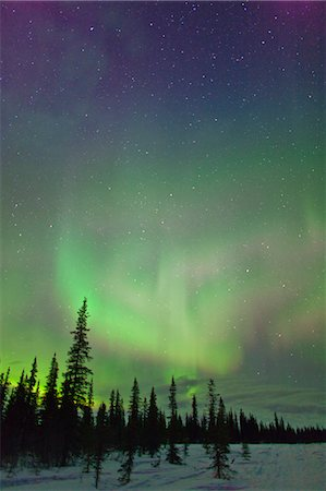 panoramic winter scene - View of Northern Lights and spruce trees in Broad Pass, Southcentral Alaska, Winter Stock Photo - Rights-Managed, Code: 854-03739933