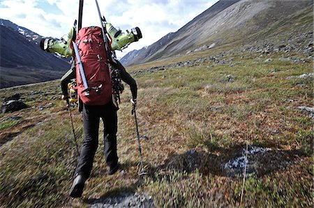 quest - Backcountry skier hikes up the Katak Creek valley with pack and skis, Brooks Range, ANWR, Arctic Alaska, Summer Stock Photo - Rights-Managed, Code: 854-03740029